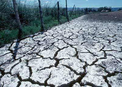 salt buildup on cracked soil surface