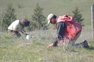 Choosing a suitable method for soil water content determination and following a well-defined procedure are important for obtaining reliable data  Photo by Kent Watson, Thompson Rivers University, Kamloops, BC.