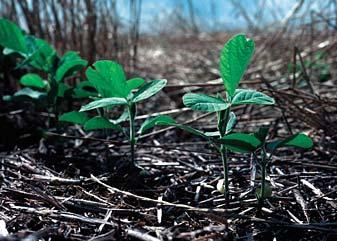 Close-up on 3 seedlings