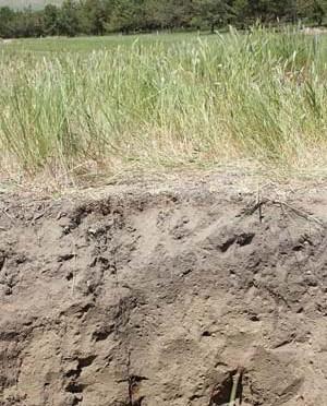 Soil grass profile